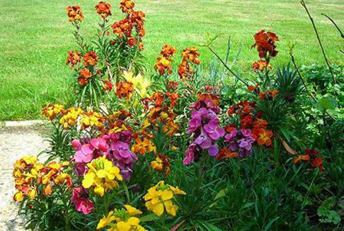 Cassier jardin services marmagne for Entretien jardin bourges