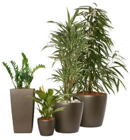 L 39 info du net tout savoir sur les plantes d 39 interieur for Toutes les plantes vertes