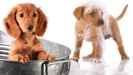 toilettage domicile chien petite et moyenne taille vente priv e bourges infoptimum. Black Bedroom Furniture Sets. Home Design Ideas